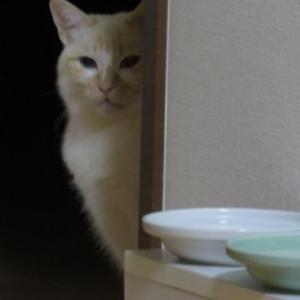 ココニイルヨ