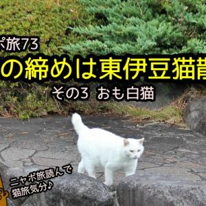 ニャポ旅73 1年の締めは東伊豆猫散策 その3 おも白猫