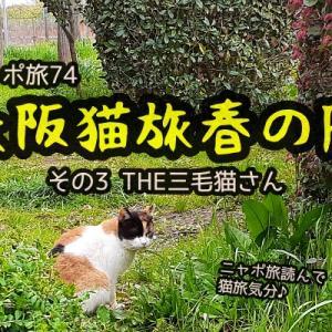 ニャポ旅74 大阪猫旅 春の陣 その3 THE三毛猫さん