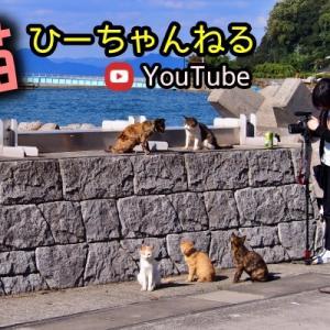 【猫ひーちゃんねる】夜の猫ちゃん、秘密の集会