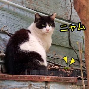 やっぱり猫さんの気持ちを理解する事は難しい♪