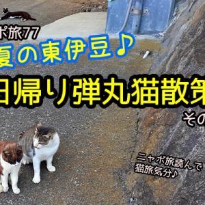 ニャポ旅77 初夏の東伊豆♪日帰り弾丸猫散策 その3