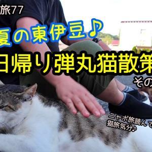 ニャポ旅77 初夏の東伊豆♪日帰り弾丸猫散策 その4