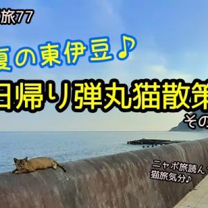 ニャポ旅77 初夏の東伊豆♪日帰り弾丸猫散策 その5