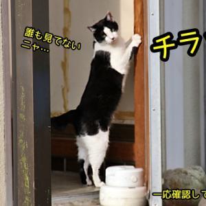 白黒猫さん、玄関の柱でガシガシ爪とぎタイム!