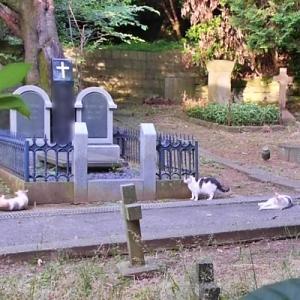 墓地を守る!?のんびり猫さん達♪