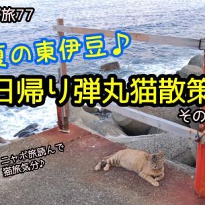 ニャポ旅77 初夏の東伊豆♪日帰り弾丸猫散策 その6