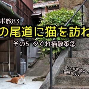 ニャポ旅83 夏の尾道に猫を訪ねて その5 夕ぐれ猫散策②
