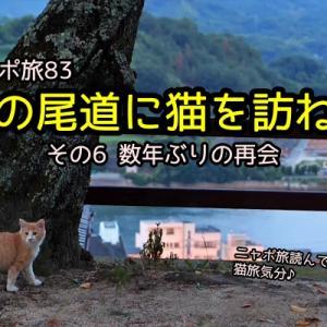 ニャポ旅83 夏の尾道に猫を訪ねて その6 数年ぶりの再会
