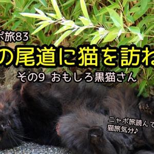 ニャポ旅83 夏の尾道に猫を訪ねて その9 おもしろ黒猫さん
