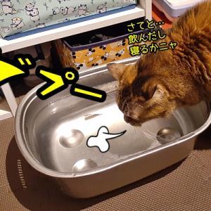 我が家のボス猫ニャポ団長は何もかもがデカかった!