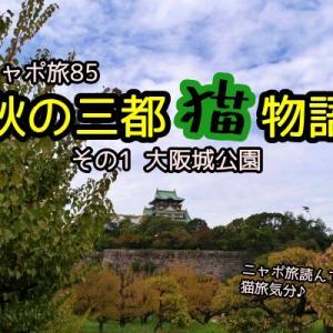 ニャポ旅85 秋の三都猫物語 その1 大阪城公園