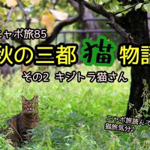 ニャポ旅85 秋の三都猫物語 その2 キジトラ猫さん