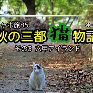 ニャポ旅85 秋の三都猫物語(神戸編) その3 六甲アイランド