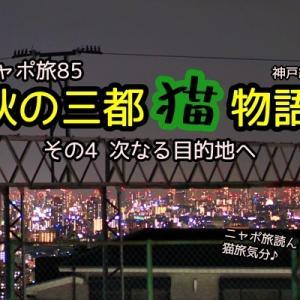 ニャポ旅85 秋の三都猫物語(神戸編) その4 次なる目的地へ