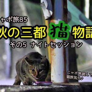 ニャポ旅85 秋の三都猫物語 その5 ナイトセッション