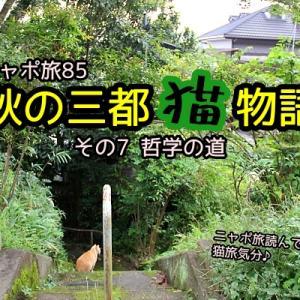 ニャポ旅85 秋の三都猫物語(京都編) その7 哲学の道