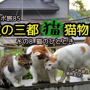 ニャポ旅85 秋の三都猫物語(京都編) その8 猫のひととき