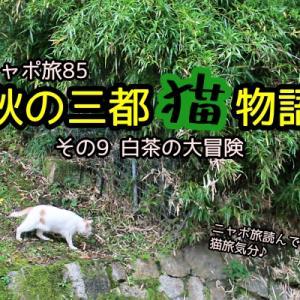 ニャポ旅85 秋の三都猫物語(京都編) その9 白茶の大冒険