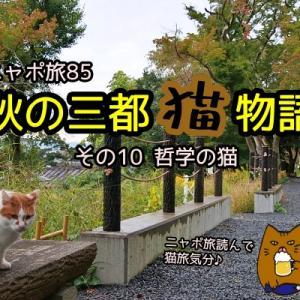ニャポ旅85 秋の三都猫物語(京都編) その10 哲学の猫