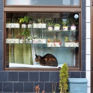 おっと、ビックリ!窓辺で佇む猫さん達♪