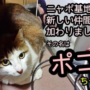 新しい猫さんが家族に加わりました!その名はポコちゃん♪