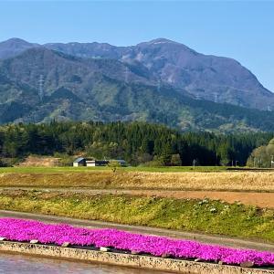 5月でも残雪のある 越前大日山(越前甲)にノボル・・・