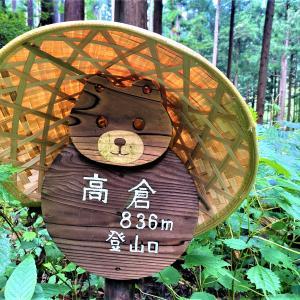マカ不思議?個性的な木の多い 高倉山にノボル!