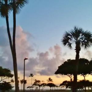 やっとココまできた、ハワイ! アラモアナビーチの散歩コースでは・・!!