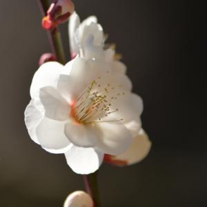 見頃の花 ①(2021)