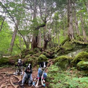 苔の森の白黒トリオ