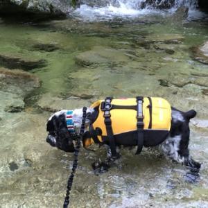 白州で川遊び