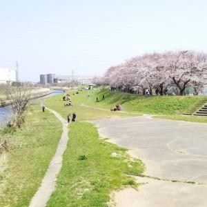 お花見散歩♪桜