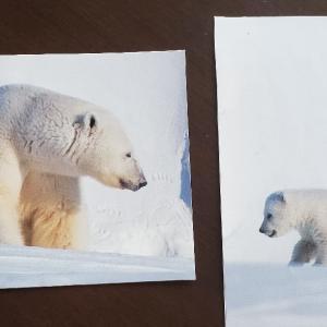 手作りポストカード&封筒