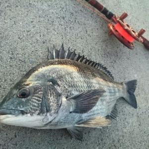 1月3日  初釣り