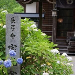 長弓寺さんの紫陽花