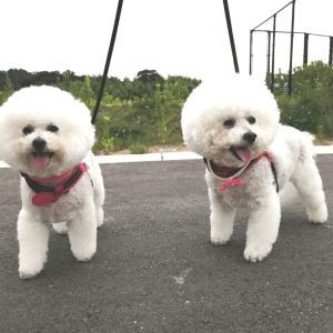 新しい公園は 動物の散歩NG