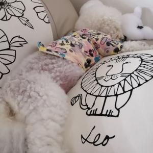 眠い日&イボ取れた