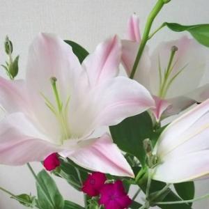 今日のお花『カサブランカとフランネルソウ』