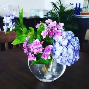今日のお花『紫陽花』