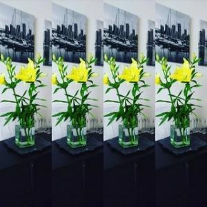 今日のお花『カサブランカ』