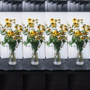 今日のお花『ルドベキア』