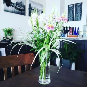 今日のお花『百日草、カクトラノオ』