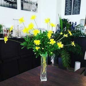 今日のお花『ユーリオプスデイジー』