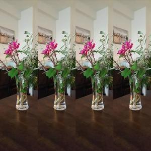 本日のお花『サルビア・インボルクラータ』