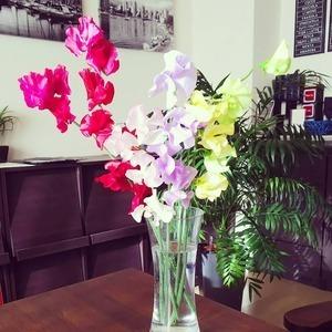 今日のお花『スイートピー』