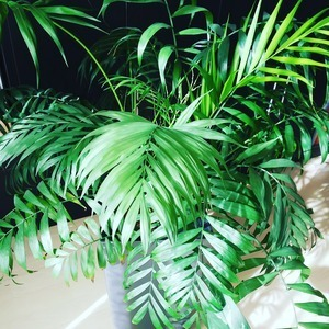 観葉植物の日光浴☆
