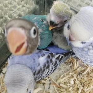 小鳥たちが入荷しております♪