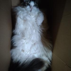 猫の謎、そして良い夜