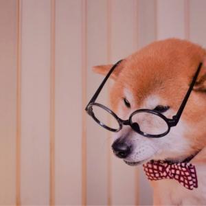 老犬になる前にペット保険に加入すべきか、とても悩みます